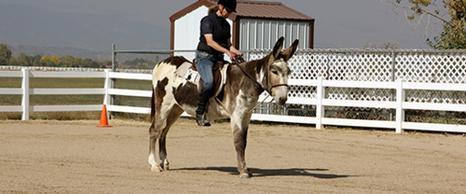 Riding In The Open Arena10 6 20 24