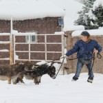 Meredith leads Spuds and Augie through the snow