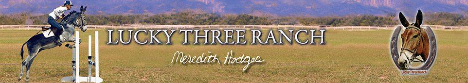 Mule, Donkey & Horse Training with Meredith Hodges