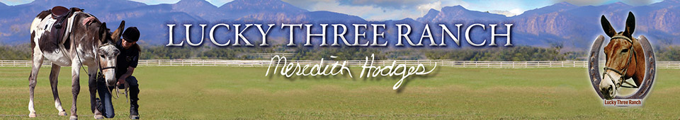 Mule, Donkey & Horse Training with Meredith Hodges