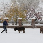 Meredith with Spuds and Augie in the snow