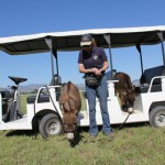 Meredith with mini donkeys Spuds and Augie on golf cart