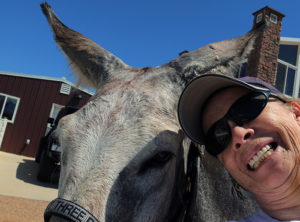 How to train a donkey through positive behavior training